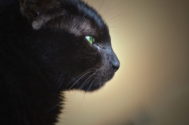 spiritual healing for animals Archives - Animal Magic Training