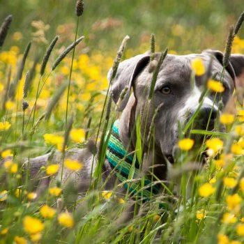 Dog Herbal