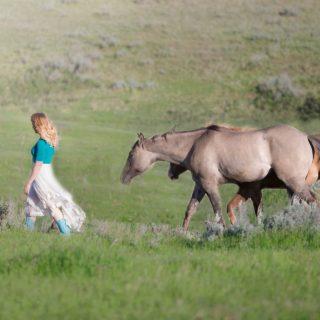 Horses 937768 1920